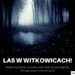 Las w Witkowicach - wielka mistyfikacja