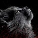 Seryjny Morderca Kotów